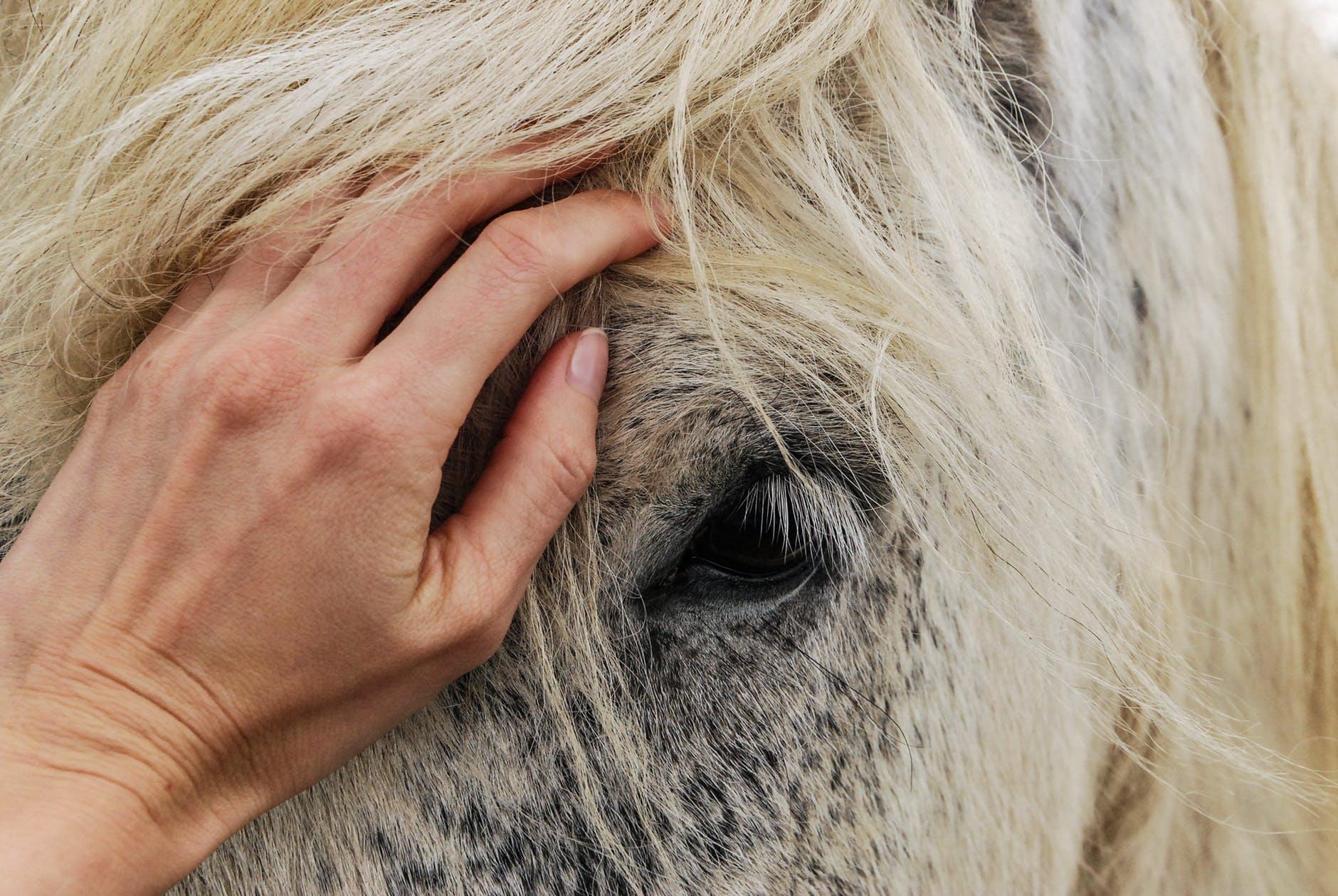 Equine Craniosacral – from head to hoof