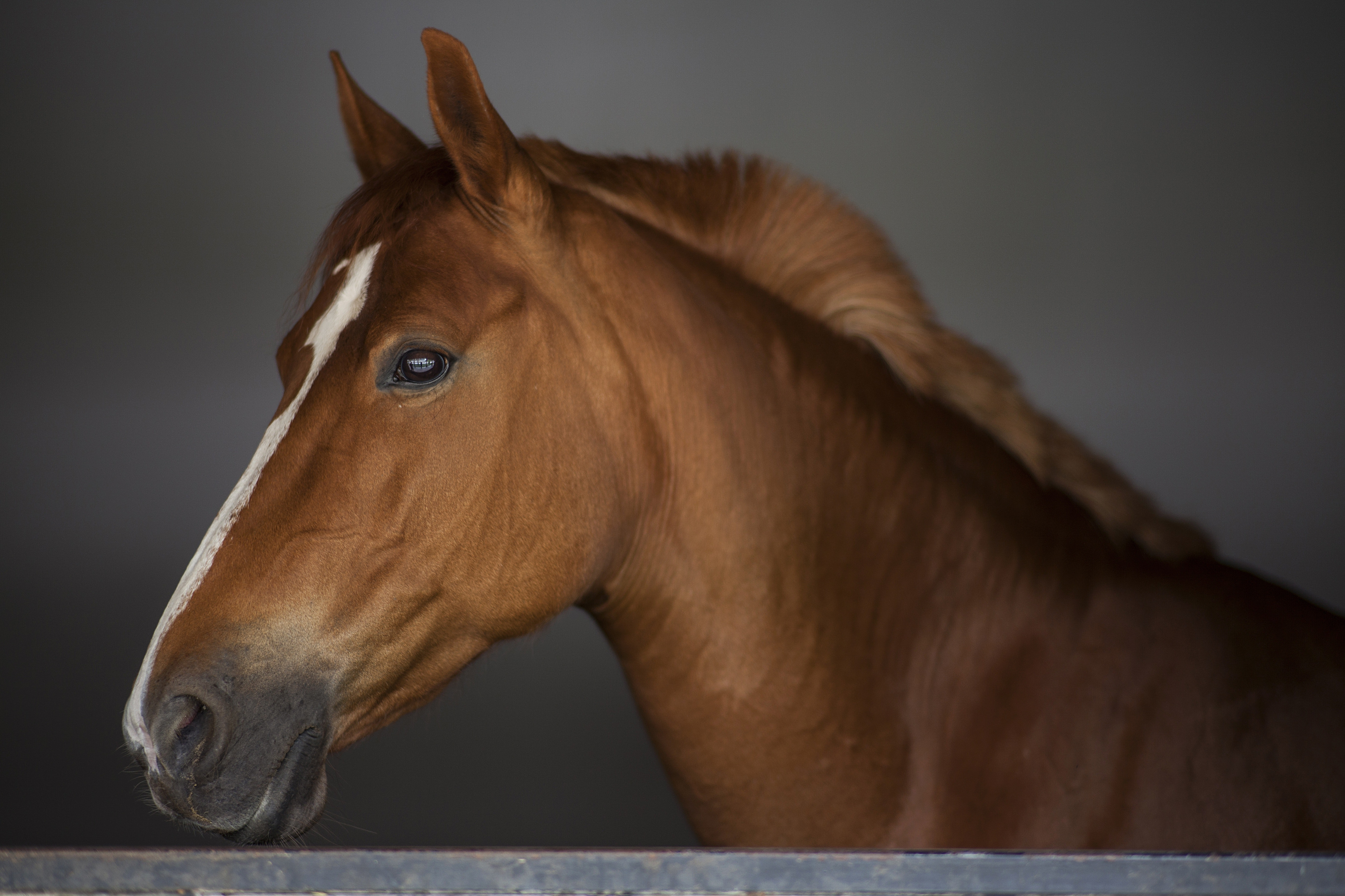 Your horse's head in your hands