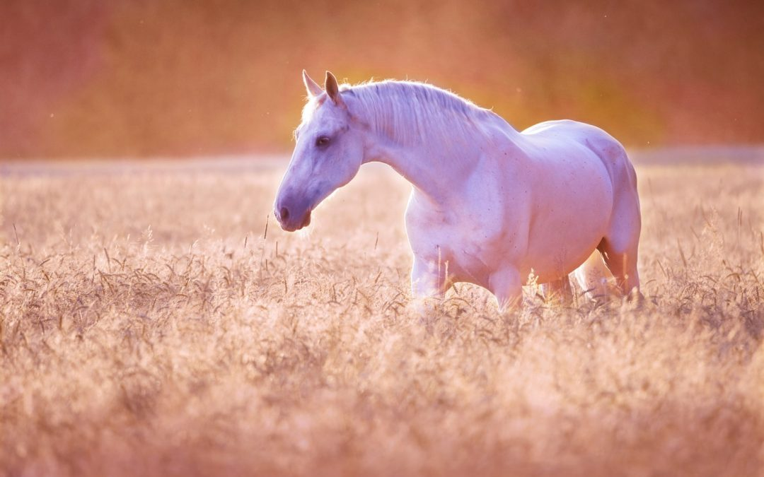 Calm horse after an equine shiatsu treatment