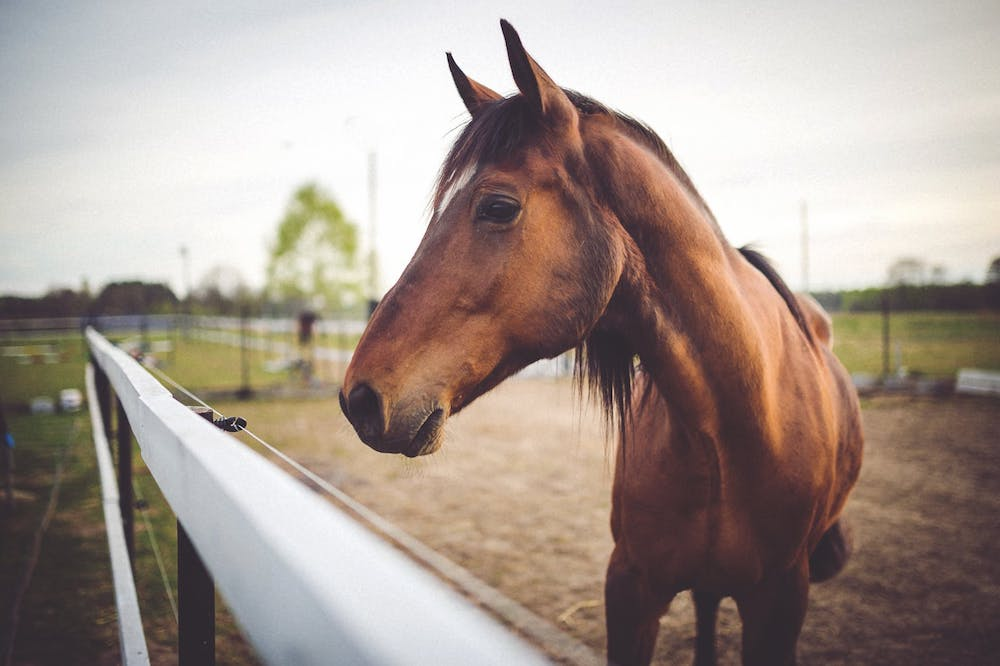 Conventional meets Complementary – An integrated approach to your horse's wellbeing