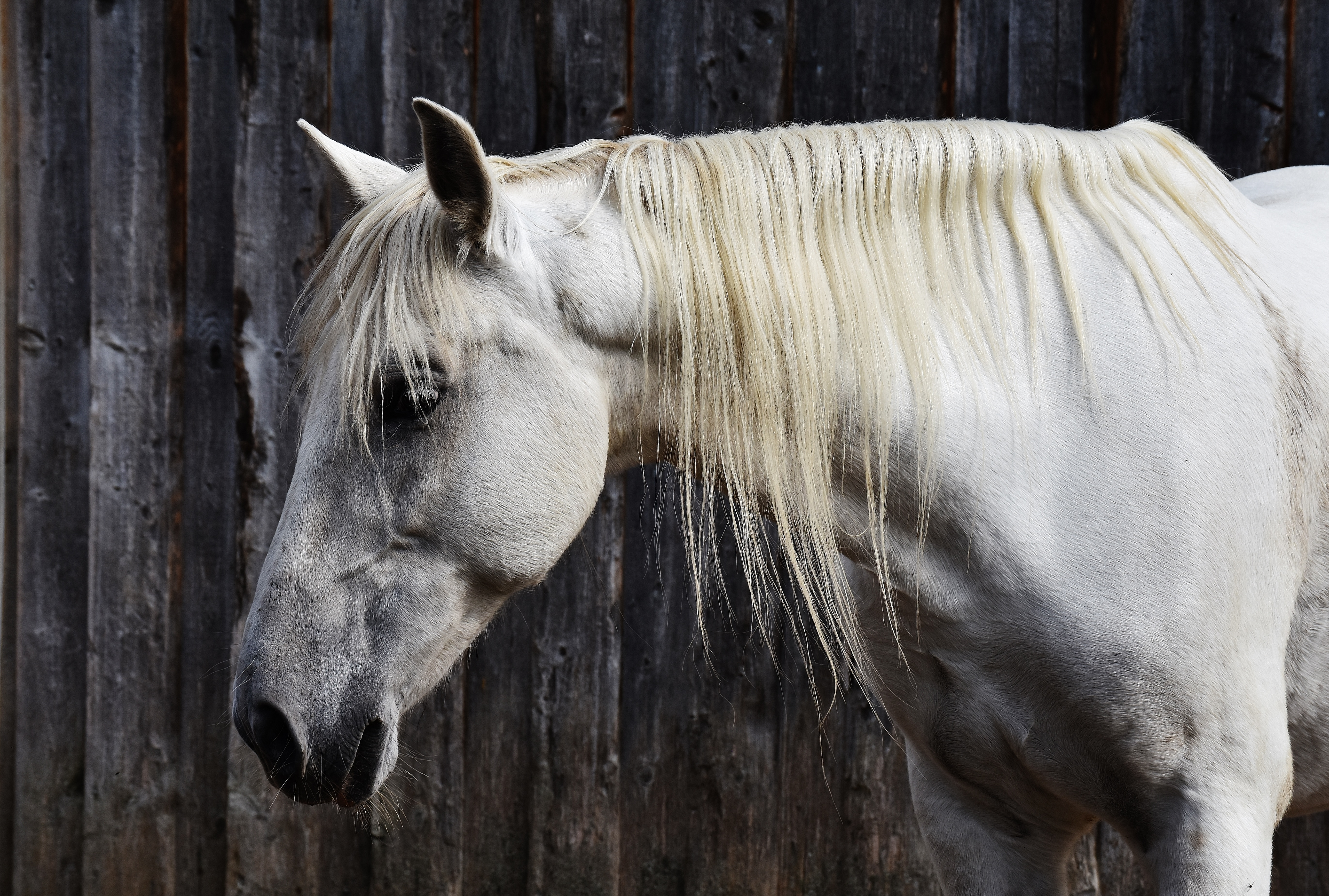 Equine Acupuncture vs Equine Shiatsu – from point to point